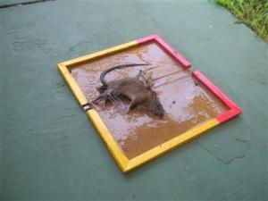 lem-perangkap-tikus-cap-gajah
